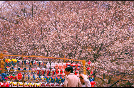Cherry Blossom vendor, Osaka