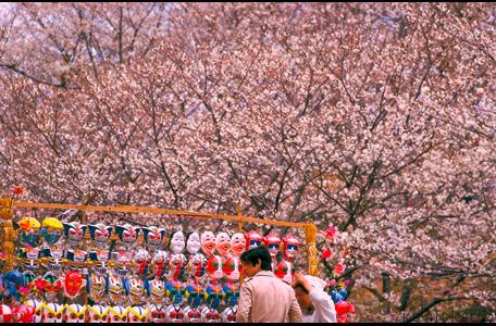 Cherry Blossom vendor, Osaka
