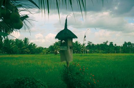 Field fetish, Bali