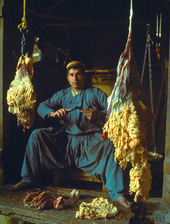 Butcher with fat-tail sheep